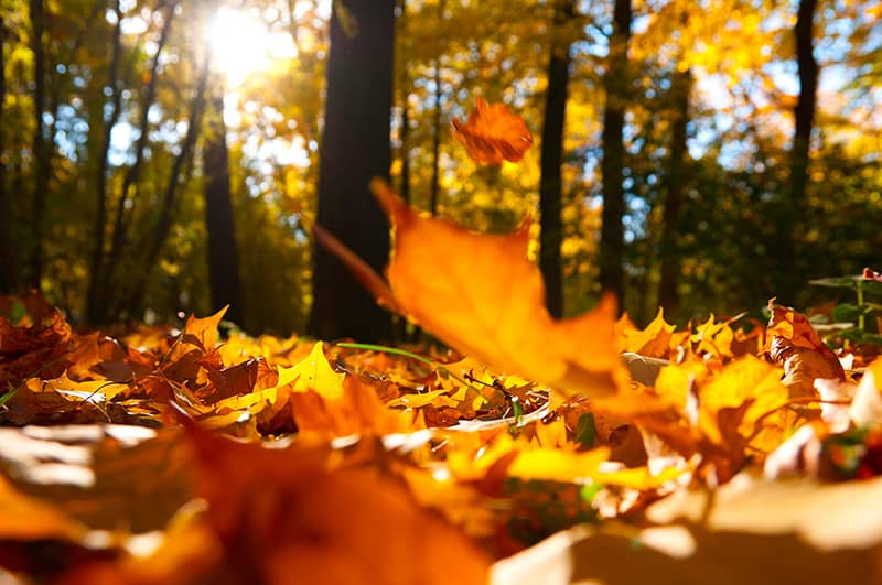 Why Fall is the Right Time for Skin Rejuvenation Therapy | Newport Tattoo Removal